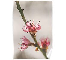 Rainy Day Peach Blossoms Poster