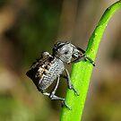 Evil Weevil by Biggzie