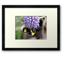 Bumble Bee by Loch Ness Framed Print