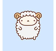Cute Sheep Photographic Print