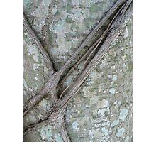 Natures Belt-NMC challenge 3 Photographic Print