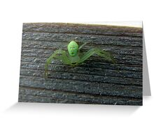 Two Faced Spider Greeting Card