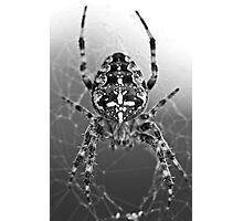 Spider! Photographic Print