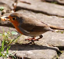 Little Robin Redbreast by ©FoxfireGallery / FloorOne Photography