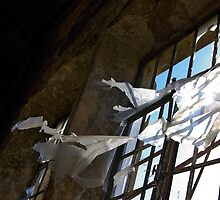 Rusty window by ccaetano