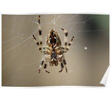 Spider Close Up 1 Poster