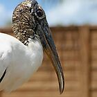 Wood Stork by Debbie Oppermann