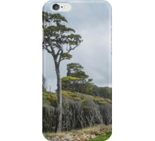 Tree on Bruce Bay  iPhone Case/Skin