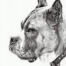 Boxer by L K Southward