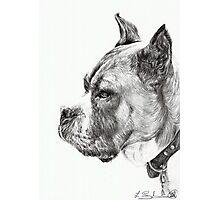 Boxer Photographic Print