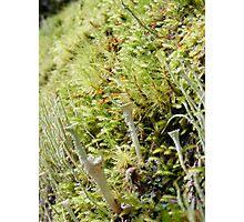 mossy growth - like alien antennas Photographic Print