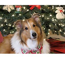 Christmas Collie Photographic Print
