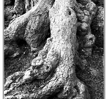 Gnarled Roots by Astrid Pardew