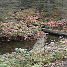 Feelings of Fall by tkrosevear