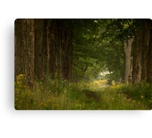 The Old Driveway Canvas Print