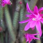 Rattail cactus flowers by Maree  Clarkson