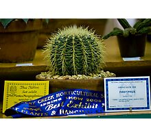 Cactus Rules Photographic Print
