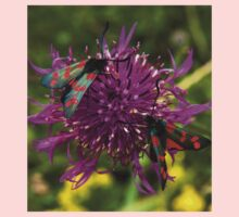"Greater Knapweed with ""6-spot Burnet"" Moths Kids Tee"