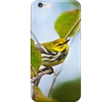 Black Throated Green Warbler iPhone Case/Skin