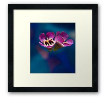 Weightless.  Framed Print