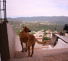 Dog Surveying His Kingdom, Taxco  by katw0man