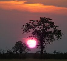 Sunset in Chobe National Park, Savuti, Botswana by leet