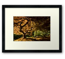 Shadows of Eden I Framed Print