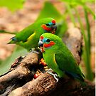 Double-eyed Fig Parrots by Crin