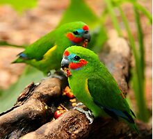 Double-eyed Fig Parrots by Corrine Symons