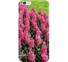 Vibrant Pink Hyacinths - Keukenhof Gardens iPhone Case/Skin