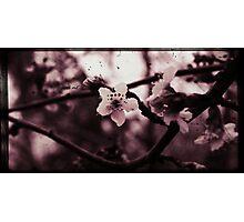 a little white liE Photographic Print