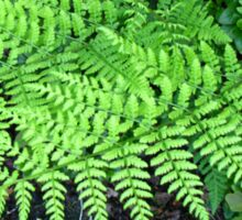 Fabulous Ferns Sticker