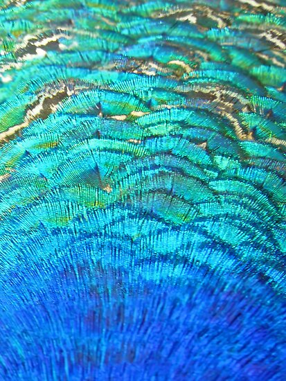 Peacock's feathers... by Nuh Sarche