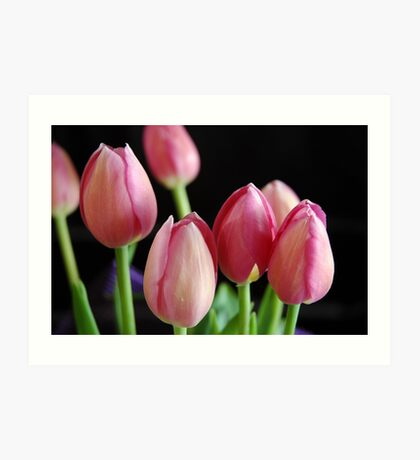 Tulips in colour Art Print