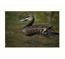 Duck Print- Close up Art Print