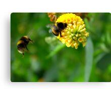Bee #4 Canvas Print