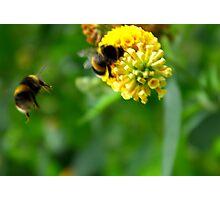 Bee #4 Photographic Print