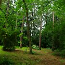 Amongst the Trees by Trevor Kersley