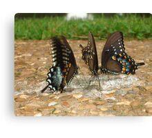 Butterfly Buffet Canvas Print