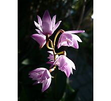 Orchid 2-2 Photographic Print