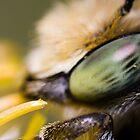 Bee Portrait by André Gonçalves