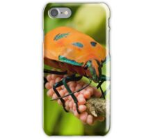 Stink Bug Eggs 00001 iPhone Case/Skin