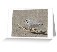 Piping Plover on the Run Greeting Card