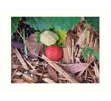 Berries Ripe and Unripe Art Print