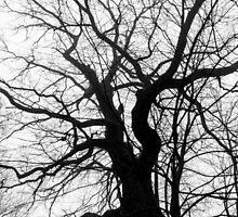 tree by Marcel Ilie