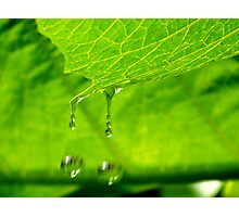 Double Droplets Photographic Print