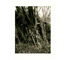 Tree trunk, Friday Woods Art Print