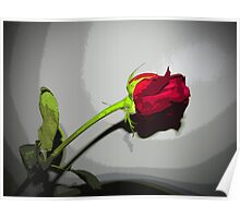 My Love Red Rose Design Poster