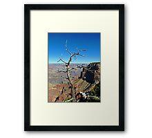 Canyon Branch Framed Print