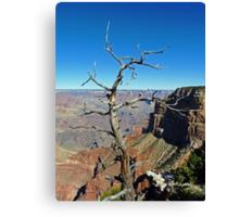 Canyon Branch Canvas Print